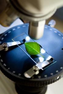fibromyalgia supplements, plant leaf in microscope