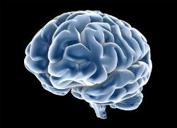 cymbalta for fibromyalgia, 3d color picture of brain